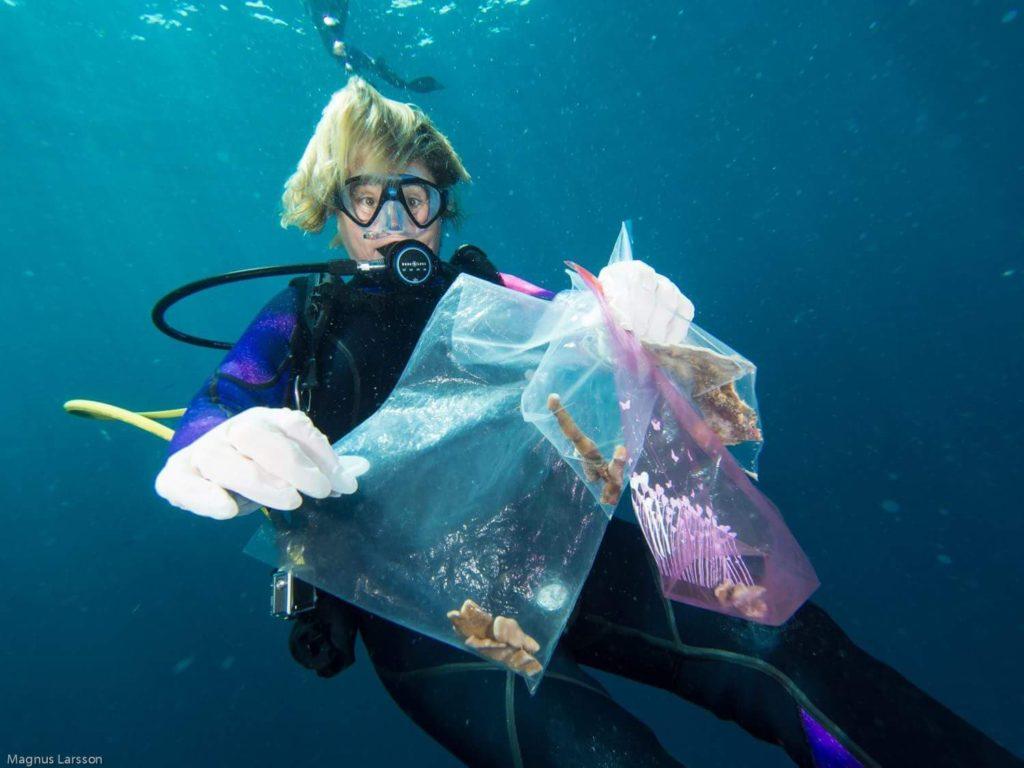 Sandrine collecte les coraux cassés